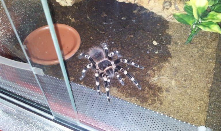 Spinne im Terrarium