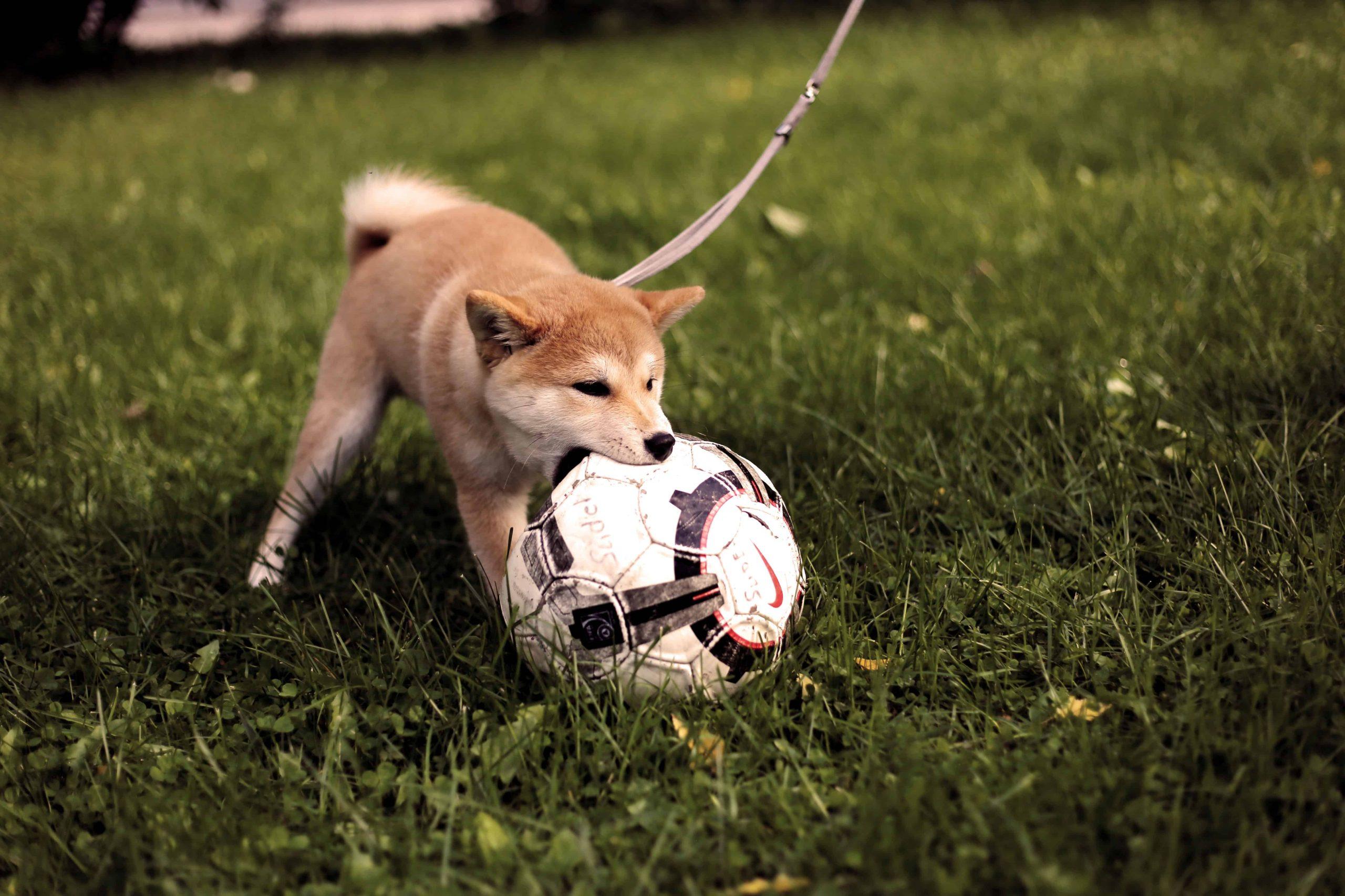 Sport mit dem Hund – Die besten Aktivitäten mit dem Vierbeiner