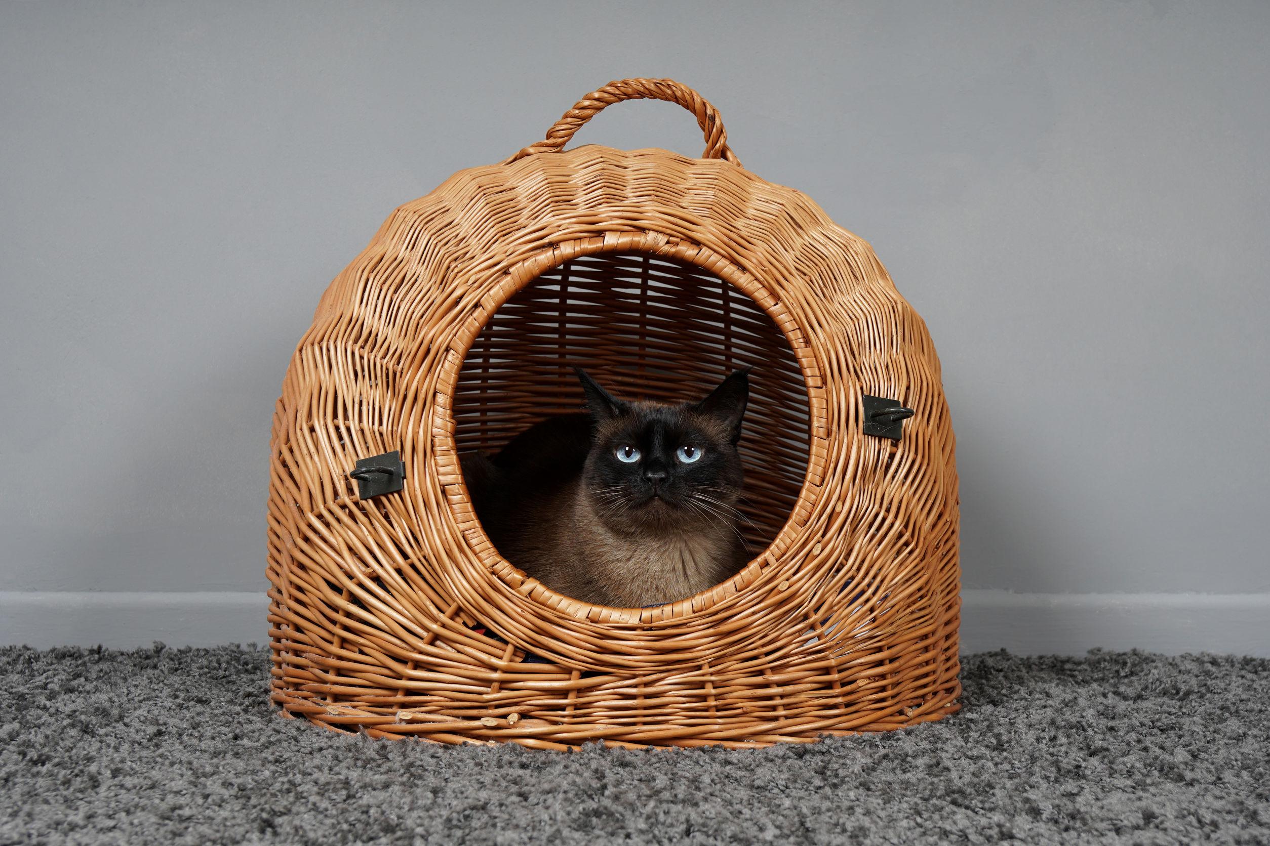 Katzenhöhle: Test & Empfehlungen (02/21)