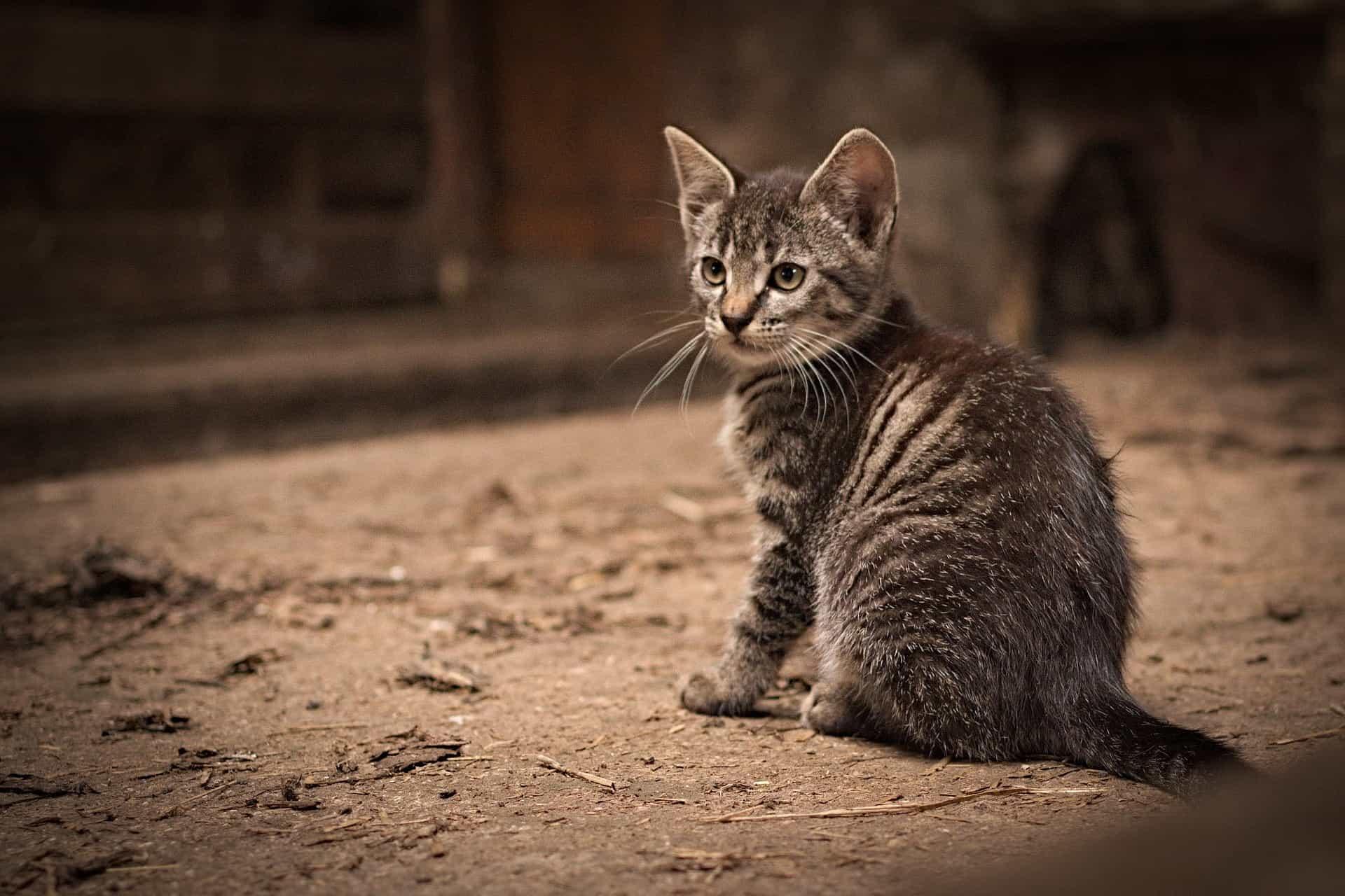 Katzenminze: Test & Empfehlungen (11/20)