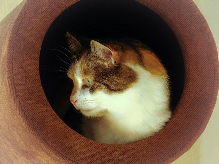 Katzenhöhle-2