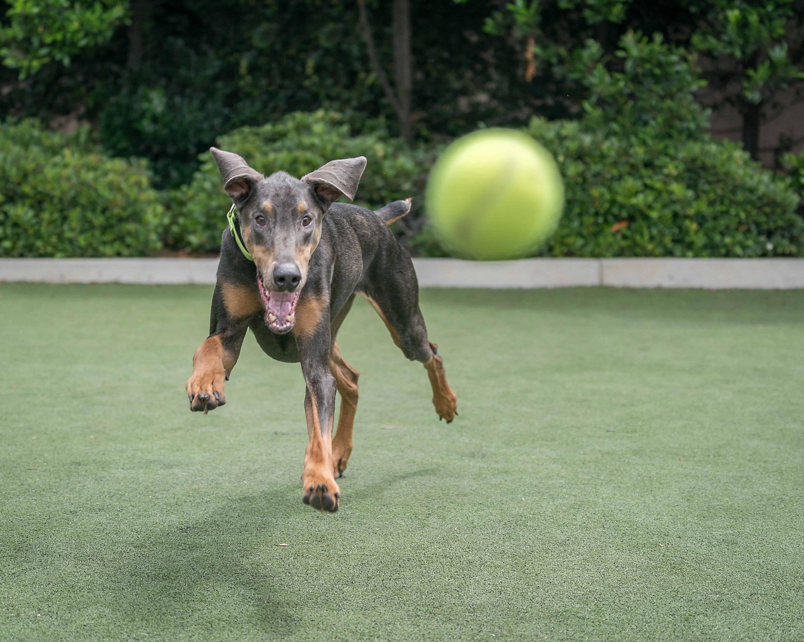 Clicker, Hundeschule & Co: Alles rund ums Hundetraining