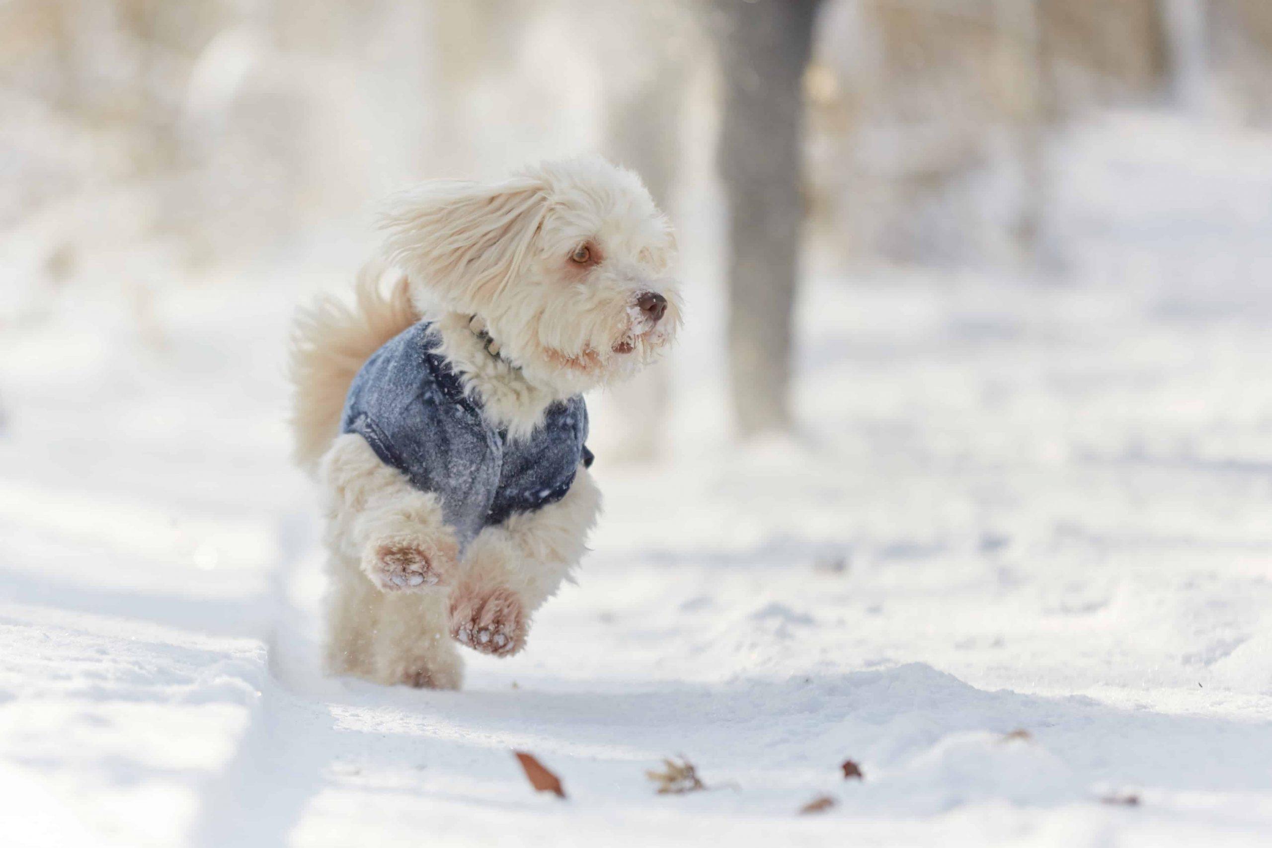 Hundepullover: Test & Empfehlungen (04/21)