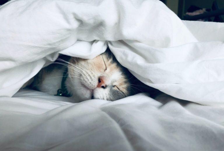 Katzenhöhle-1