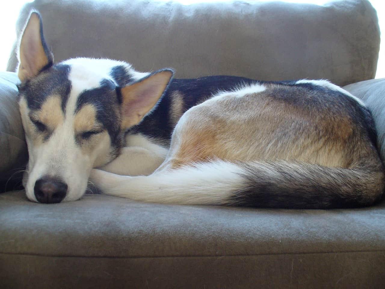Hundesofa: Test & Empfehlungen (11/20)