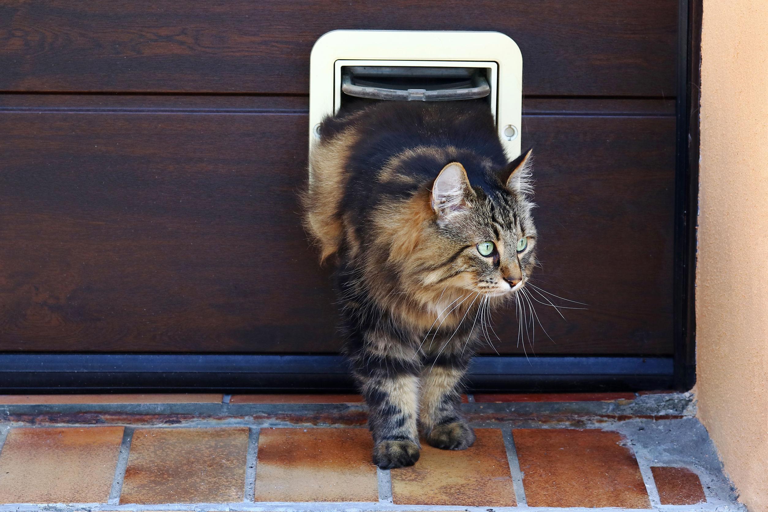 Katzenklappe mit Chip: Test & Empfehlungen (04/21)