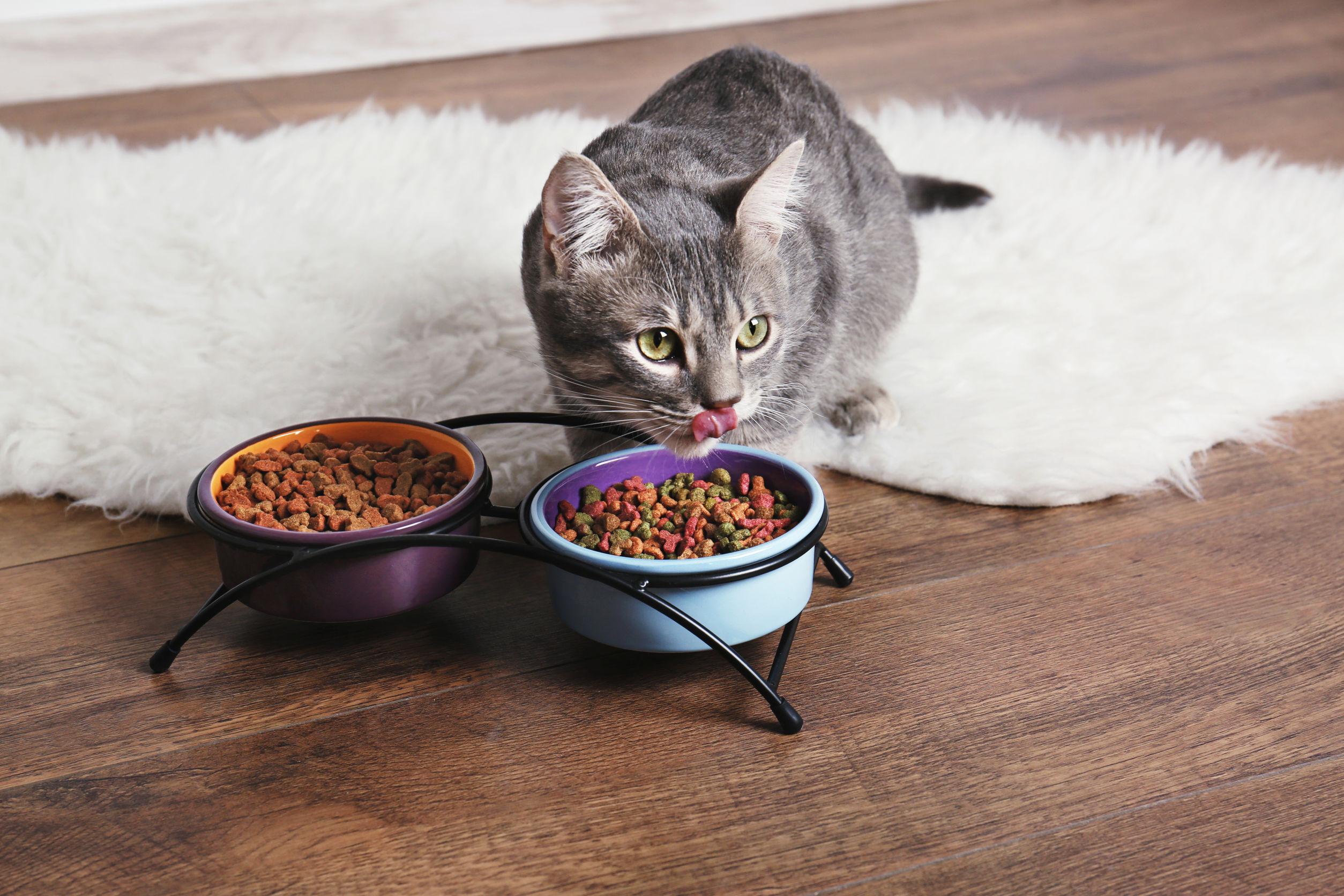 Trockenfutter für Katzen: Test & Empfehlungen (04/21)