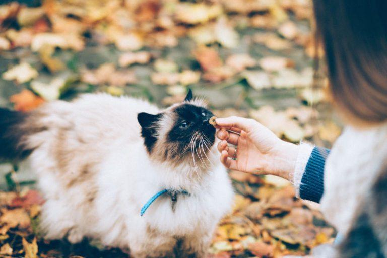 Katzen Trockenfutter-1