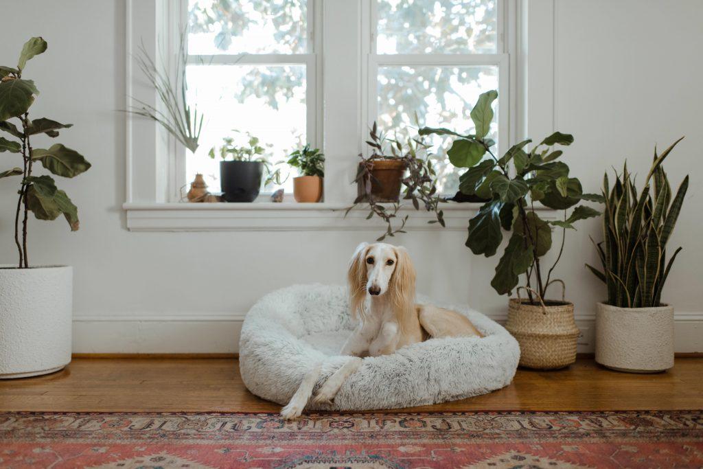 Hundematratze