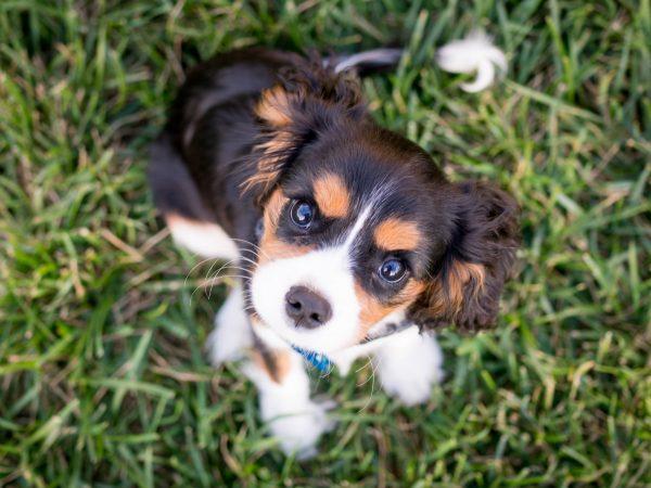 Vor allem Hundebesitzer sind sich unsicher wie sehr ihr Vierbeiner von Corona betroffen ist. Bildquelle: Austin Kirk/123rf